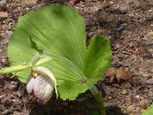 植物44-4
