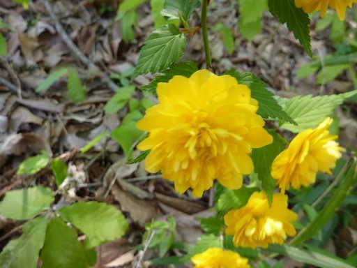 植物45-7