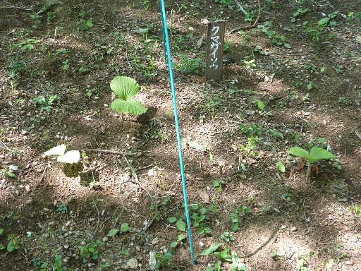 植物45-10