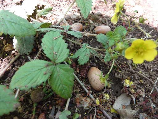 植物45-15