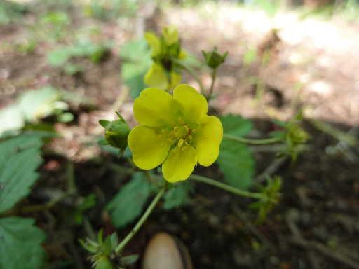 植物45-14