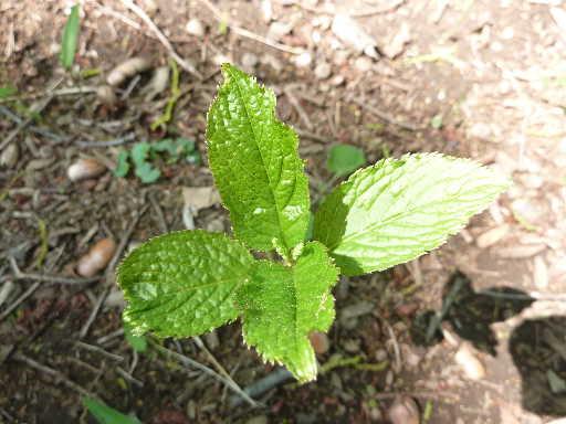 植物45-11
