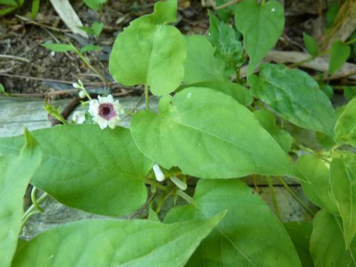 植物58-12