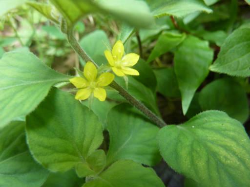 植物61-14