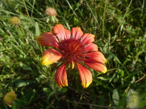 植物62-16