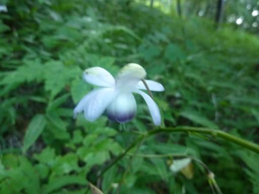 植物63-9