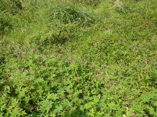 植物65-23