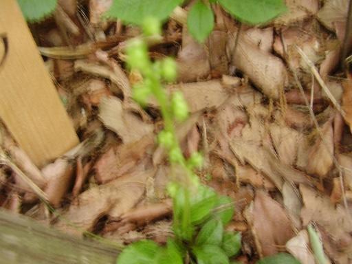 植物68-15