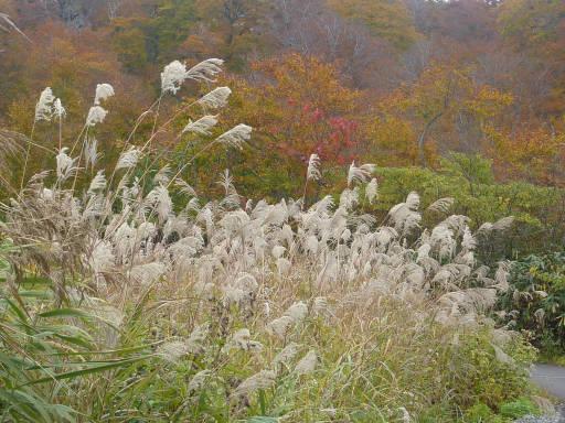 20101024・野々海高原10