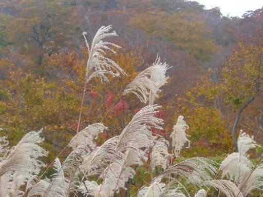 20101024・野々海高原12