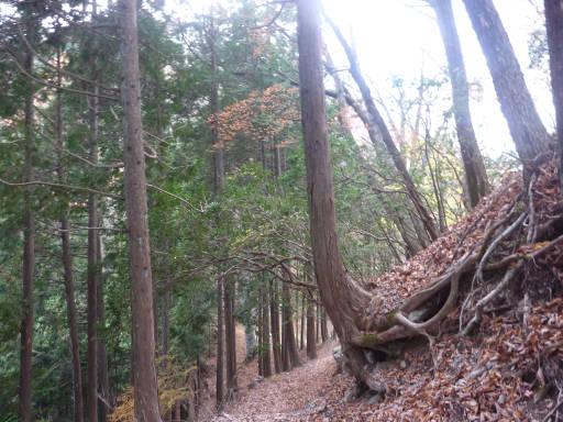 20101113・三峰妙法下山22