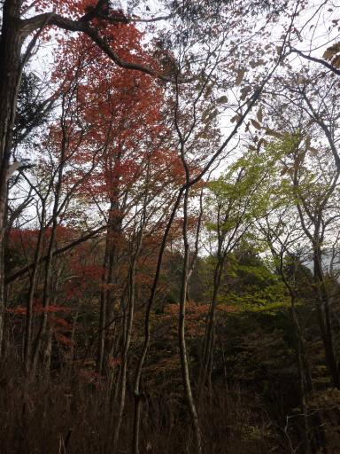 20101113・三峰妙法下山36