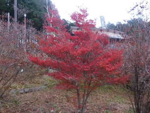 20101113・三峰神社39