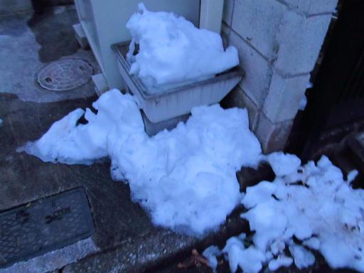 20130122・雪が降る01