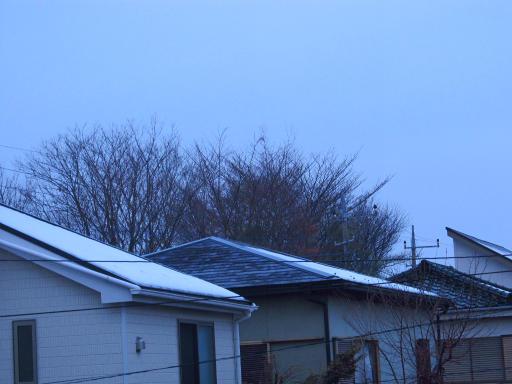 20130122・雪が降る15