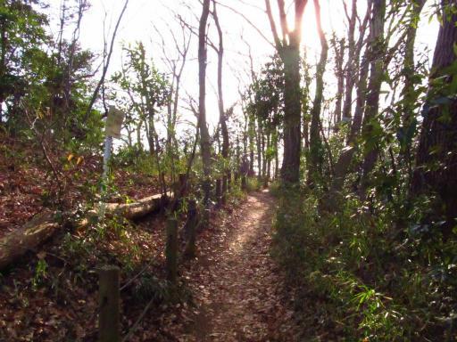 20120209・狭山湖散歩1-06