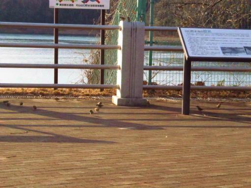 20120209・狭山湖散歩1-13