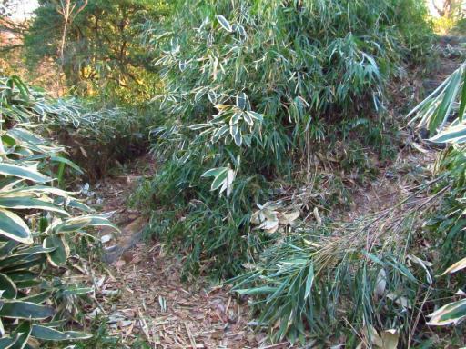 20120209・狭山湖散歩2-15