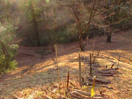 20120209・狭山湖散歩2-21