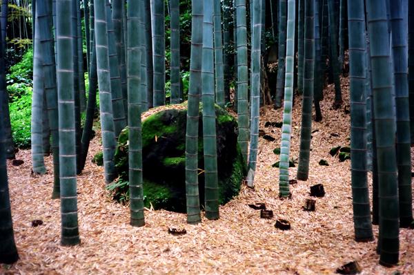 20100611報国寺6su