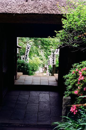 20100611杉本寺2su