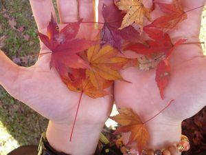 手のひらの紅葉