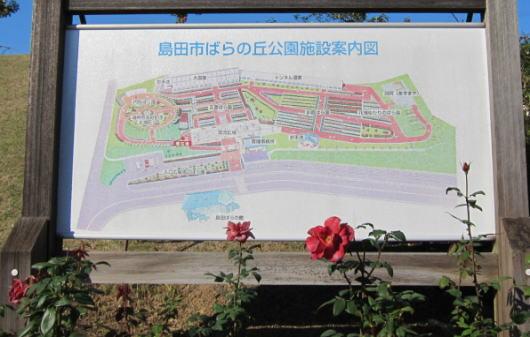 島田のバラ園