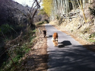 くるみちゃんとお散歩