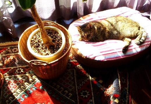 シッコ被害に遭ったトルコ絨毯と猫クッションとテラ姫さま