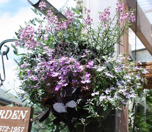 T's Garden Healing Flowers‐ロベリア・チャームのハンギング