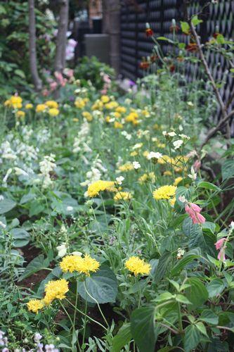 T's Garden Healing Flowers‐黄色系の夏花壇