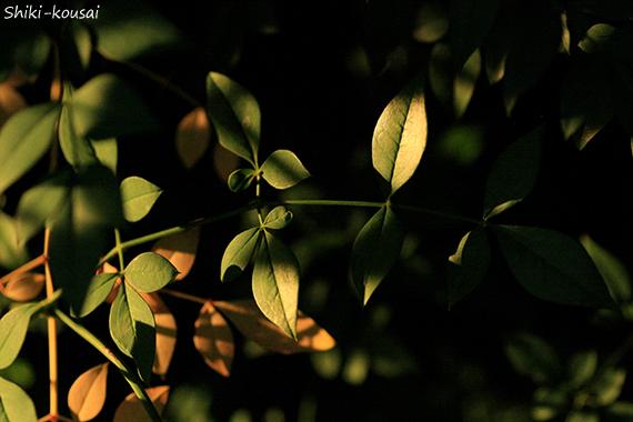 反射光・夕日