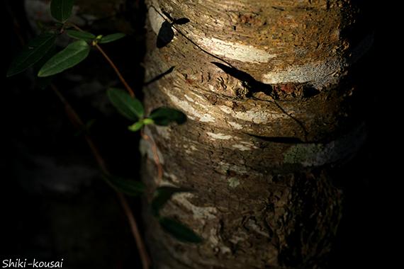 木肌・光と影