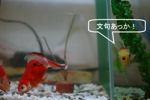 kani_bon_mizukusa.jpg