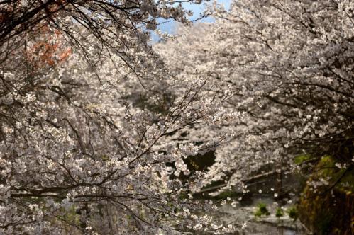 2012桜4s