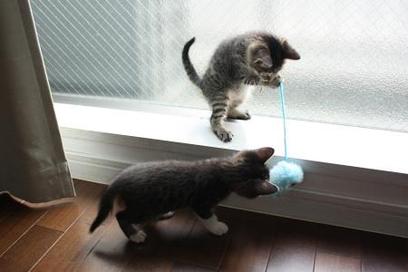 子猫いっちょう!