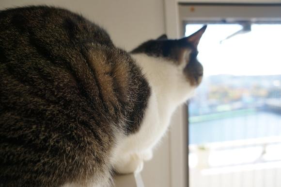 ふくらすずめ猫