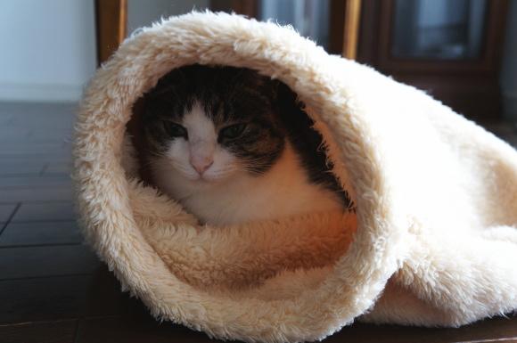 床暖房、まだ?