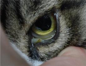 ネコ白血病4