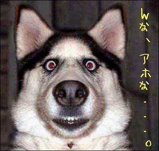 DogObedienceTraining.jpg