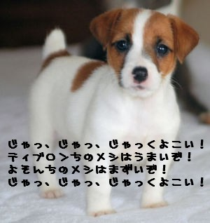 Lundic_pupimage2.jpg