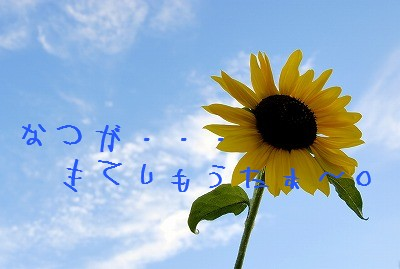 SummerSunflower1.jpg