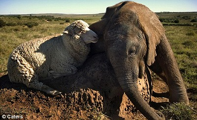 baby-elephant-and-a-ship.jpg