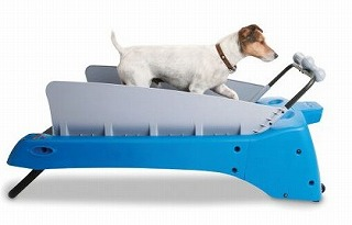 dog-treadmill-indoor-exercise-for-your-pet.jpg