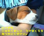 jrt-puppies-sleeping.jpg