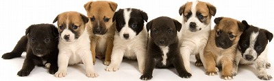 jrt_mix_puppies_nh2j.jpg