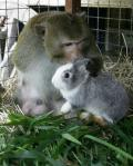 macaque-and-rabbit.jpg