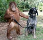 orangutan-and-a-blue-tick-hound.jpg