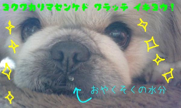 コピー ~ 100428_1032~0002