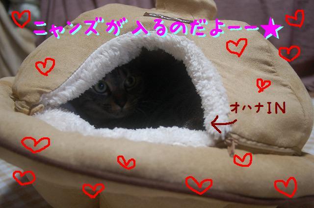 20101223-8.jpg
